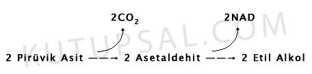 Etil Alkol Fermantasyonu Şeması
